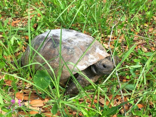 turtle - KintheKitchen