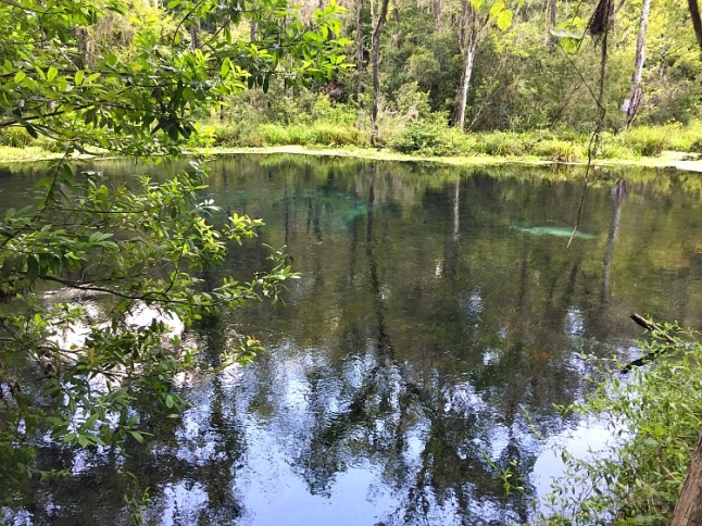 Blue Hole Florida ---KintheKitchen