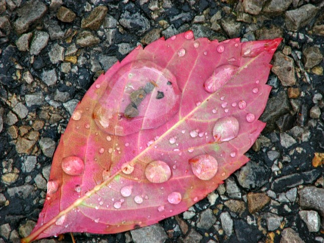 Leaf after storm - KintheKitchen