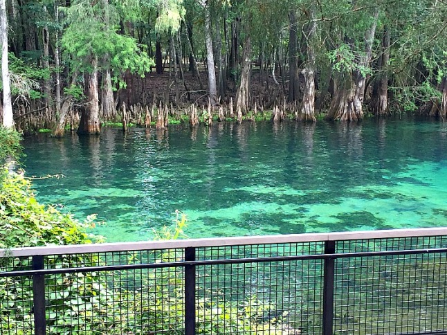 Manatee Springs KintheKitchen