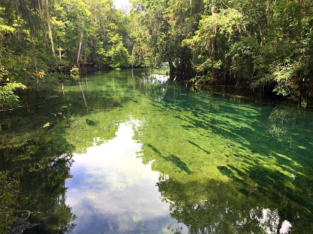 Manatee Springs--KintheKitchen