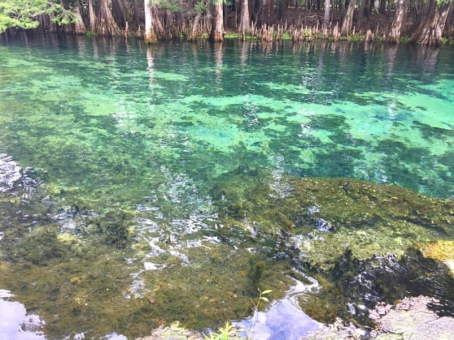 Manatee Springs --KintheKitchen
