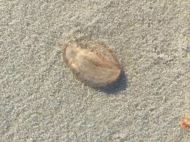 JellyfishKintheKitchen