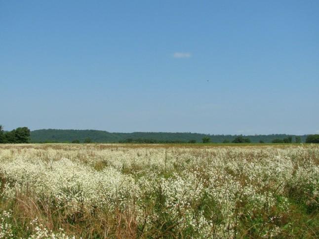 Fieldflowers KintheKitchen